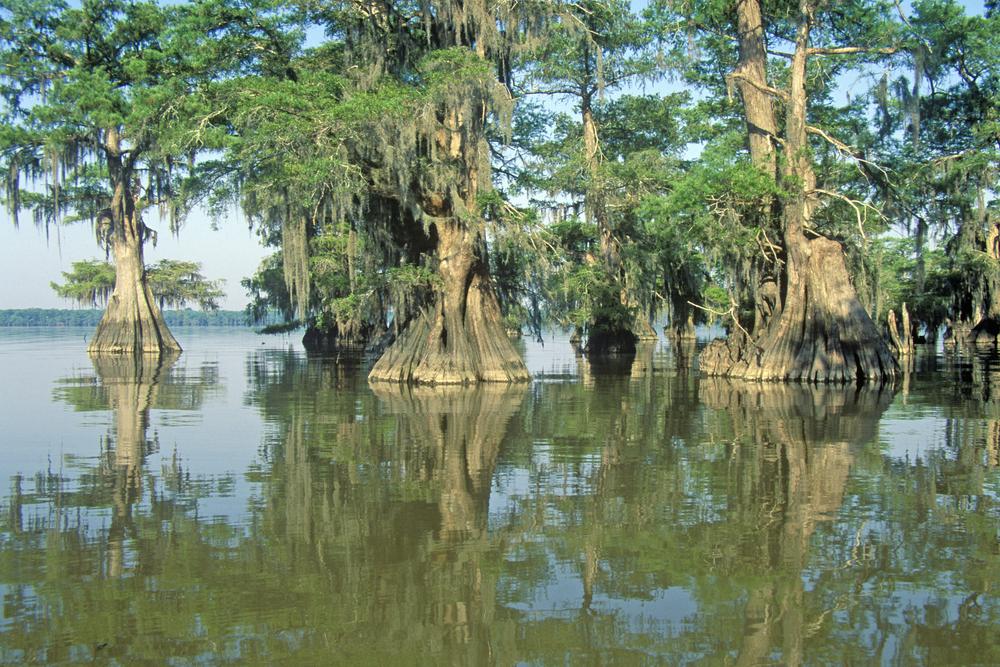 Louisiane Ville Saint Martin Ville